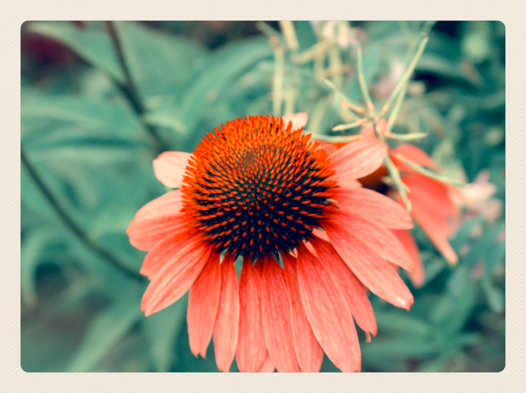 Blume-in-Retrostyle